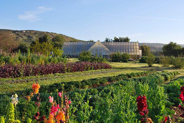 organic farm_13
