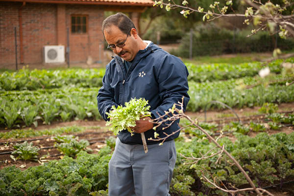 organic farm_14