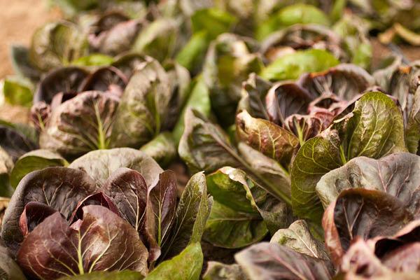 organic farm_3