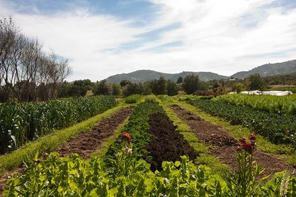 organic farm_6