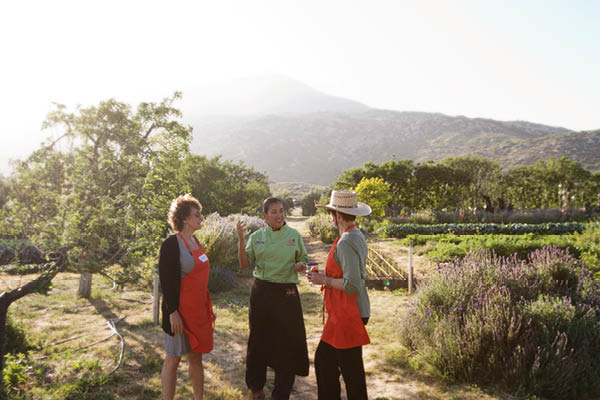 organic farm_8